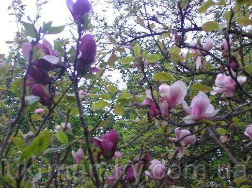 Ботанічний сад київ ботанічний сад